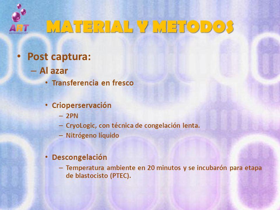 MATERIAL Y METODOS Post captura: – Al azar Transferencia en fresco Crioperservación – 2PN – CryoLogic, con técnica de congelación lenta. – Nitrógeno l