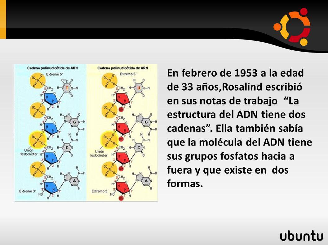 En febrero de 1953 a la edad de 33 años,Rosalind escribió en sus notas de trabajo La estructura del ADN tiene dos cadenas.