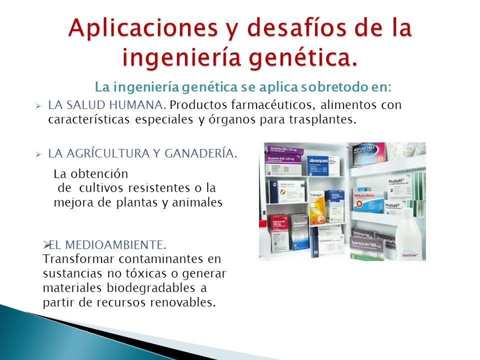 La ingeniería genética se aplica sobretodo en: LA SALUD HUMANA. Productos farmacéuticos, alimentos con características especiales y órganos para trasp