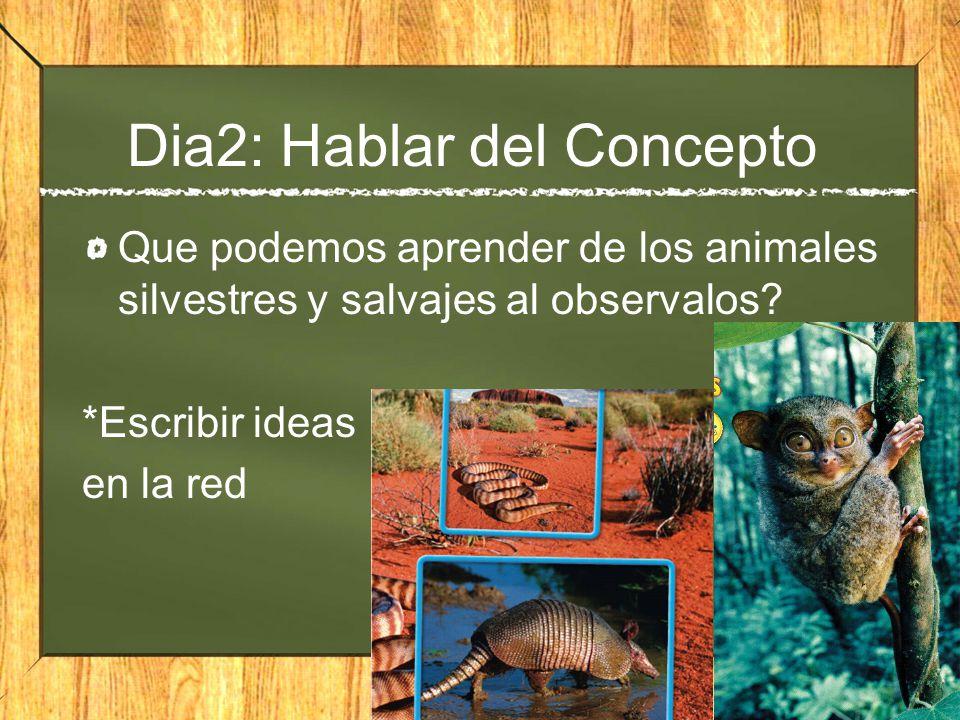 Dia2: Hablar del Concepto Que podemos aprender de los animales silvestres y salvajes al observalos? *Escribir ideas en la red