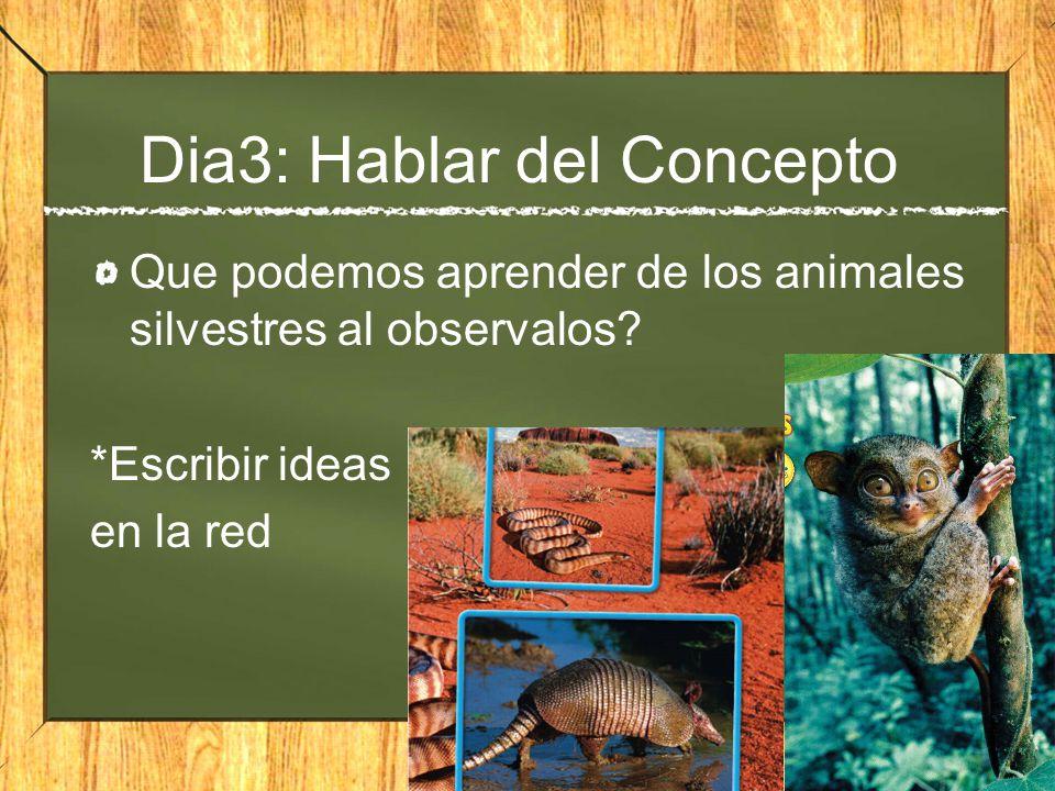 Dia3: Hablar del Concepto Que podemos aprender de los animales silvestres al observalos? *Escribir ideas en la red
