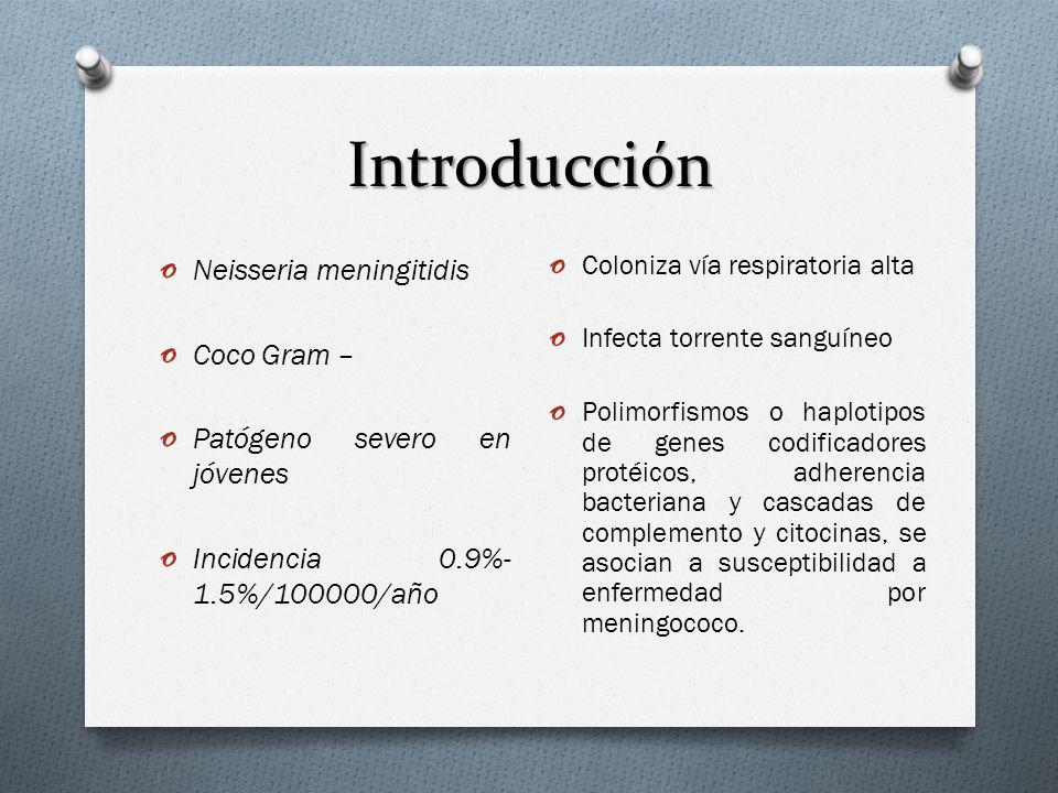 Introducción o Neisseria meningitidis o Coco Gram – o Patógeno severo en jóvenes o Incidencia 0.9%- 1.5%/100000/año o Coloniza vía respiratoria alta o Infecta torrente sanguíneo o Polimorfismos o haplotipos de genes codificadores protéicos, adherencia bacteriana y cascadas de complemento y citocinas, se asocian a susceptibilidad a enfermedad por meningococo.
