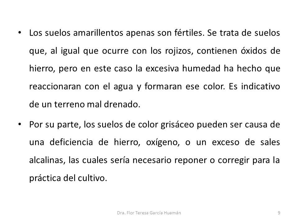 10Dra. Flor Teresa García Huamán