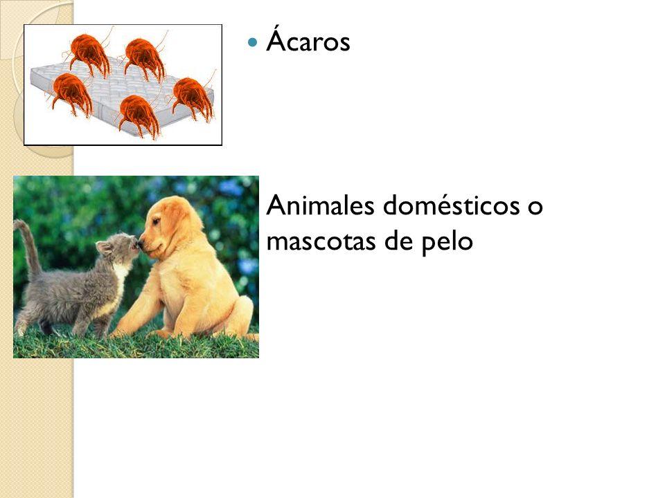 Ácaros Animales domésticos o mascotas de pelo