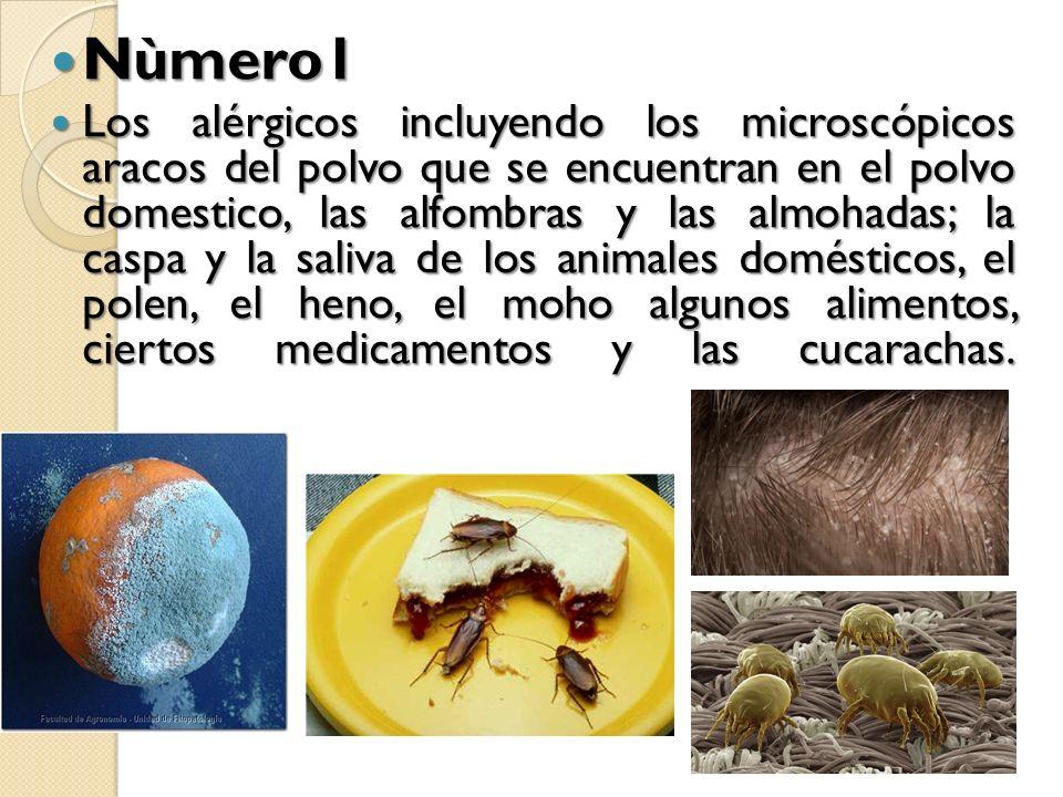 Nùmero1 Nùmero1 Los alérgicos incluyendo los microscópicos aracos del polvo que se encuentran en el polvo domestico, las alfombras y las almohadas; la