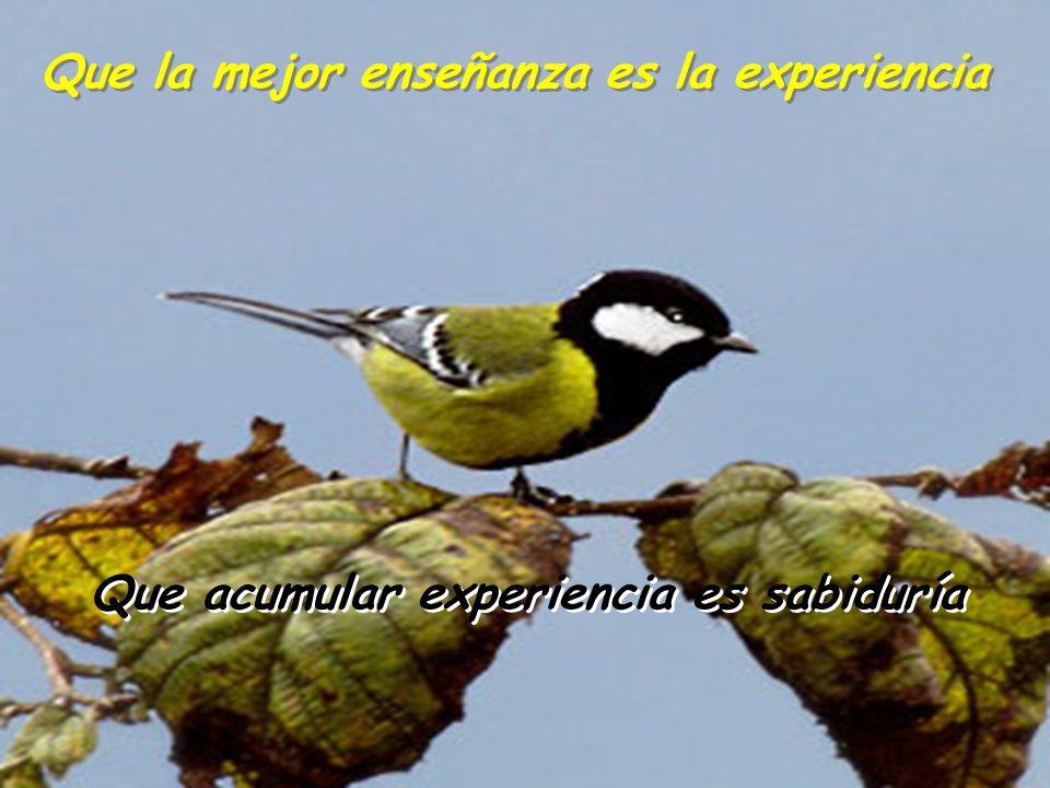 Que acumular experiencia es sabiduría Que acumular experiencia es sabiduría Que la mejor enseñanza es la experiencia