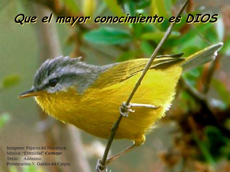 Que el mayor conocimiento es DIOS Que el mayor conocimiento es DIOS Imágenes: Pájaros del Himalaya..