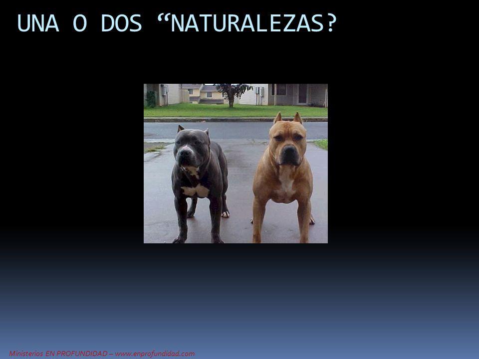 Ministerios EN PROFUNDIDAD – www.enprofundidad.com UNA O DOS NATURALEZAS?