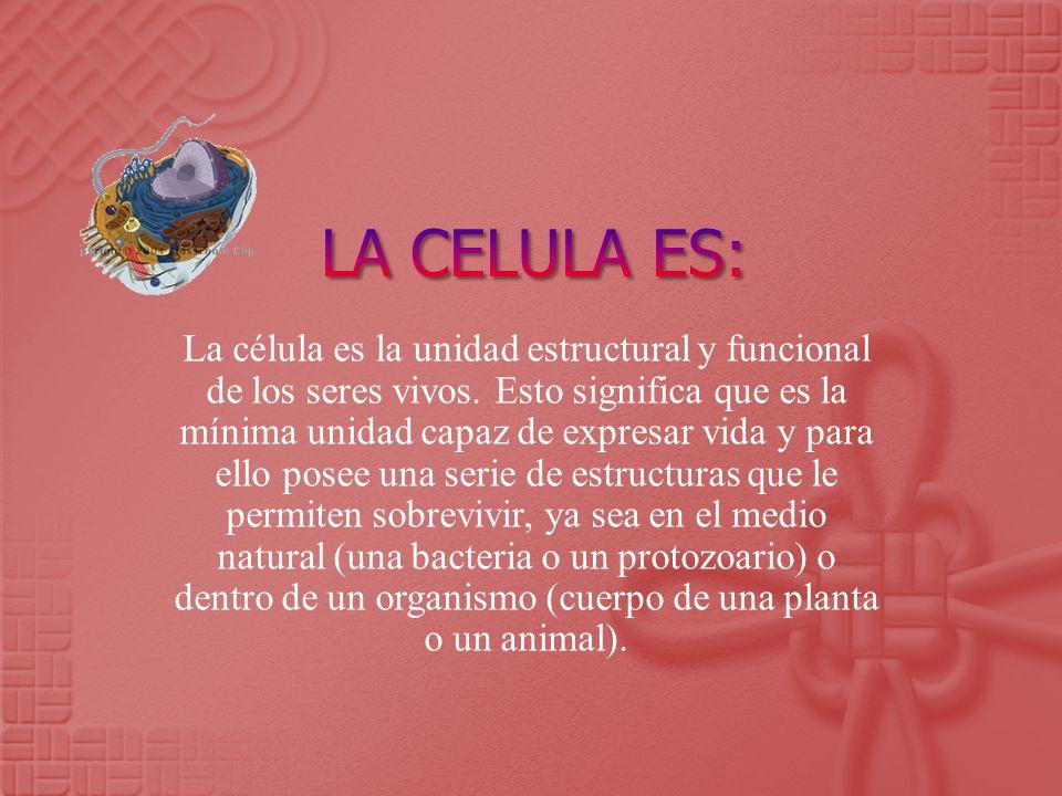 La célula es la unidad estructural y funcional de los seres vivos. Esto significa que es la mínima unidad capaz de expresar vida y para ello posee una