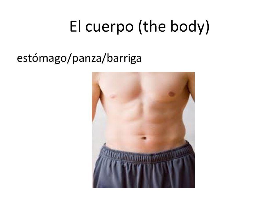 El cuerpo (the body) estómago/panza/barriga