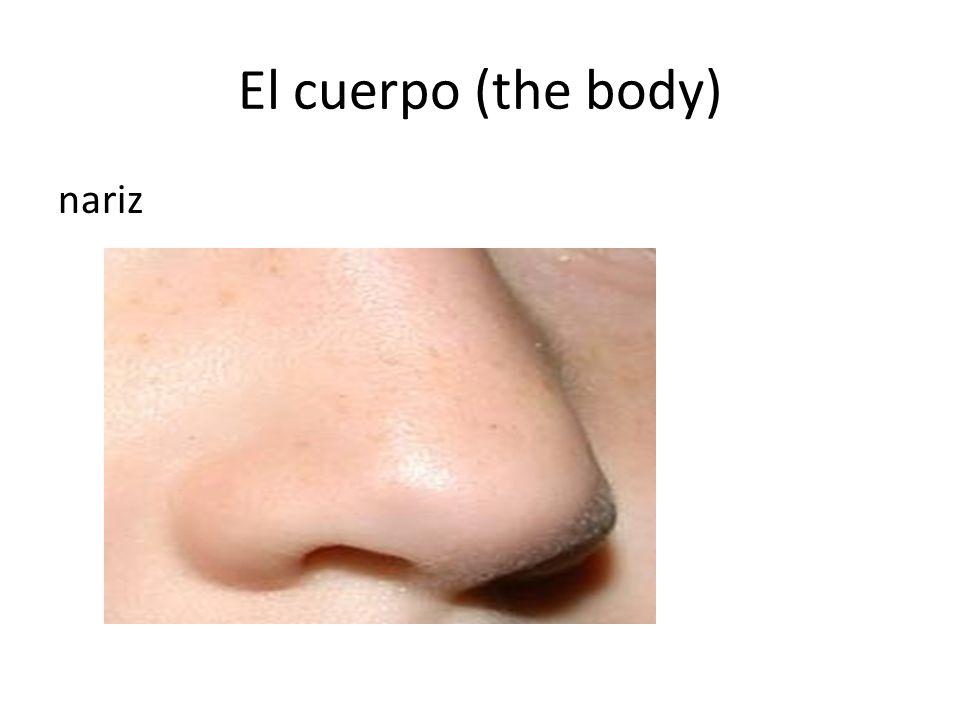 El cuerpo (the body) nariz