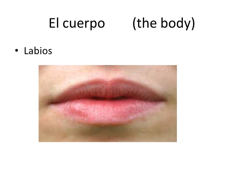 El cuerpo (the body) Labios