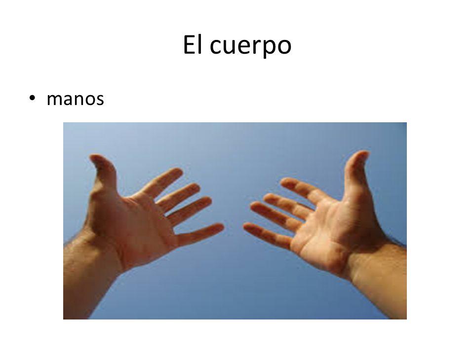 El cuerpo manos