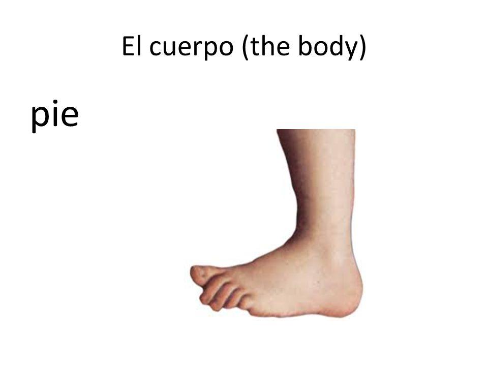 El cuerpo (the body) pie