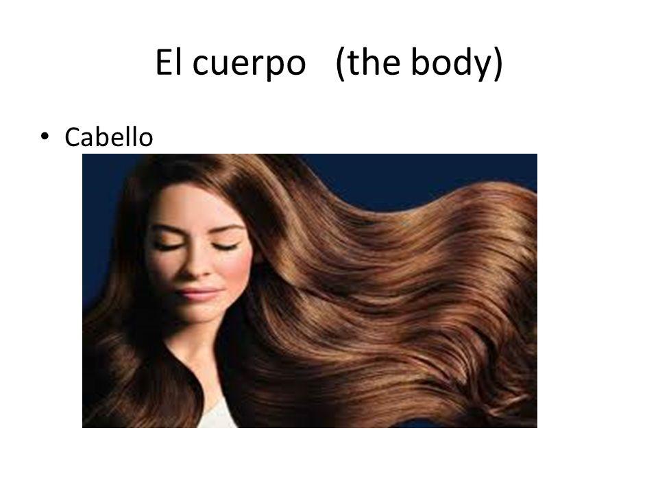 El cuerpo (the body) Cabello