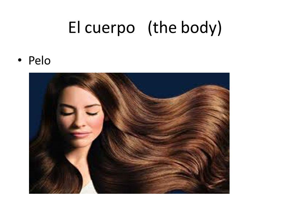 El cuerpo (the body) Pelo