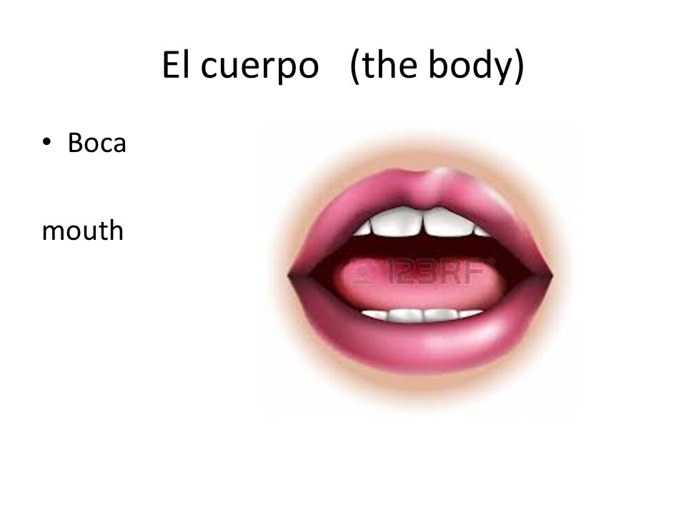 El cuerpo (the body) Boca mouth