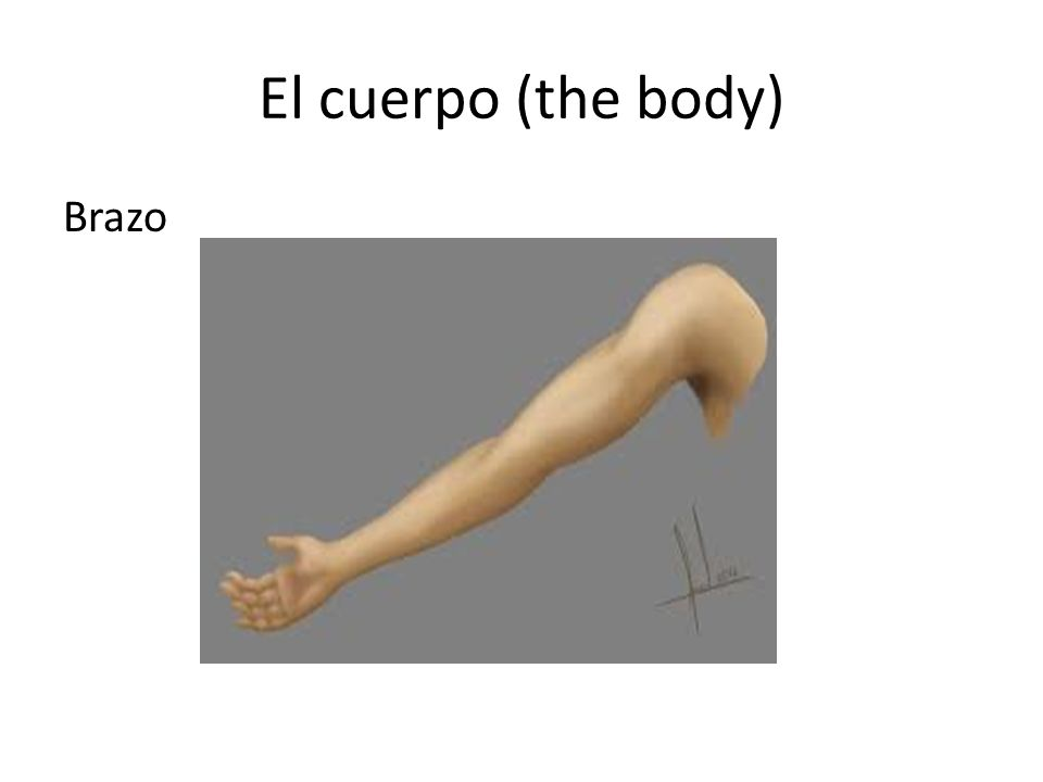 El cuerpo (the body) Choose the right answer What part of the body is this.