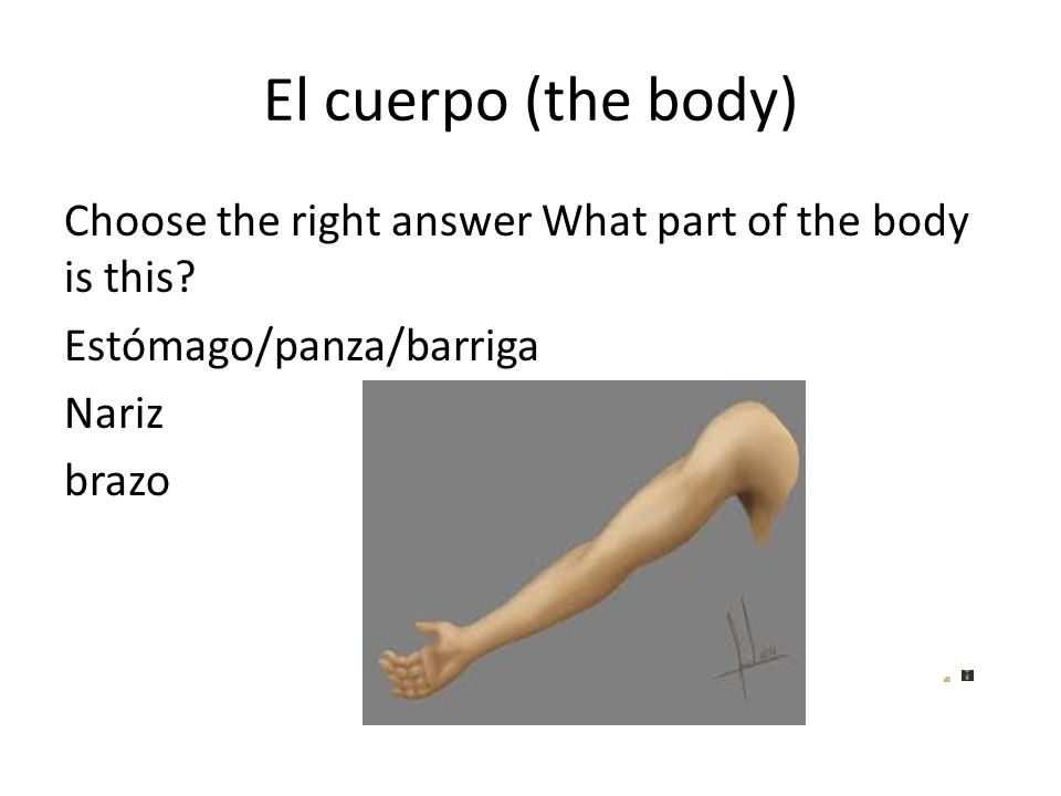 El cuerpo (the body) Choose the right answer What part of the body is this? Estómago/panza/barriga Nariz brazo