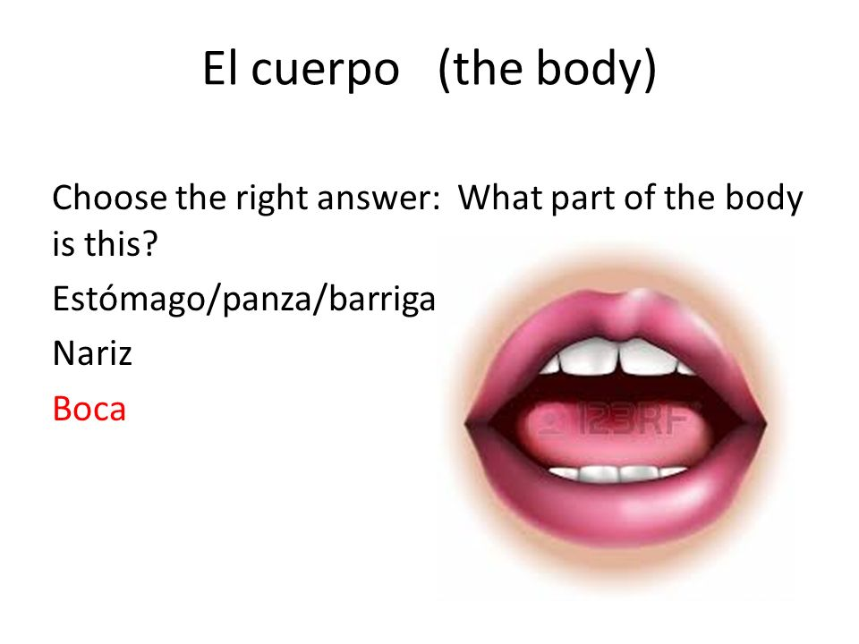 El cuerpo (the body) Choose the right answer: What part of the body is this? Estómago/panza/barriga Nariz Boca