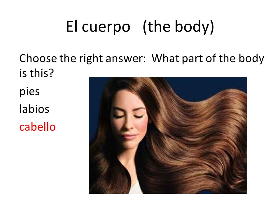 El cuerpo (the body) Choose the right answer: What part of the body is this pies labios cabello