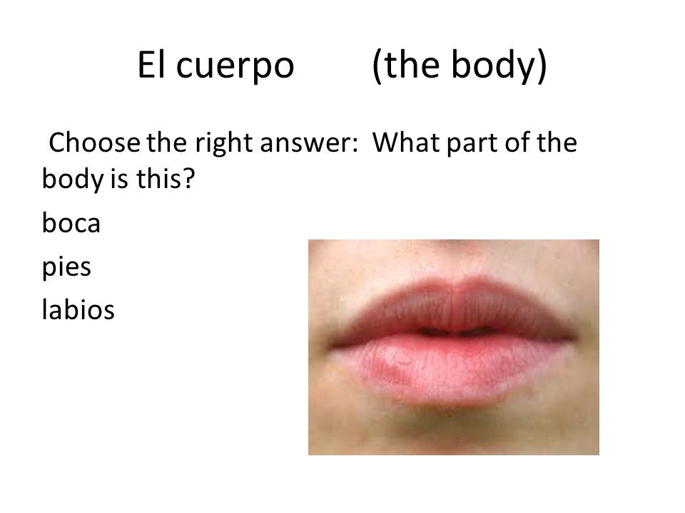 El cuerpo (the body) Choose the right answer: What part of the body is this? boca pies labios