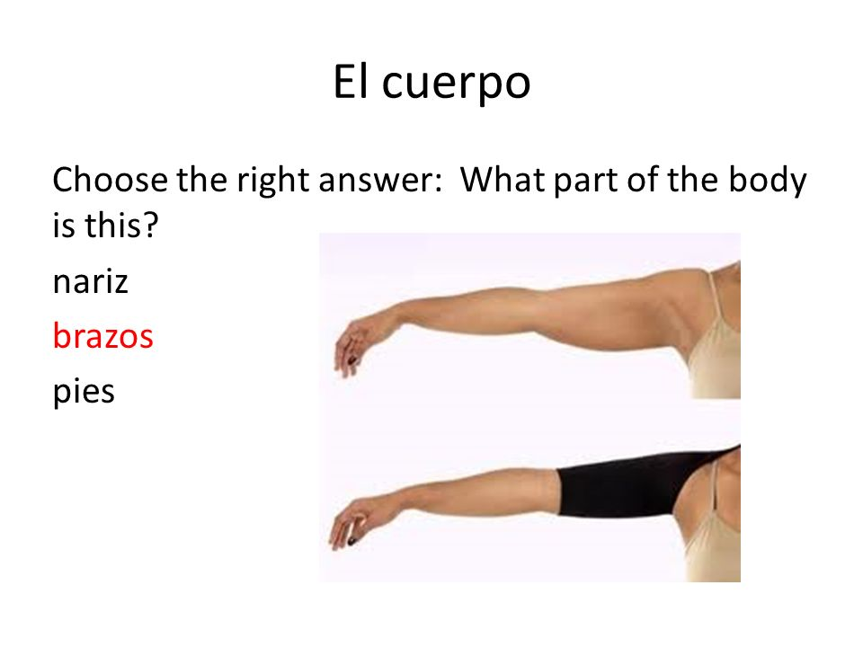 El cuerpo Choose the right answer: What part of the body is this? nariz brazos pies