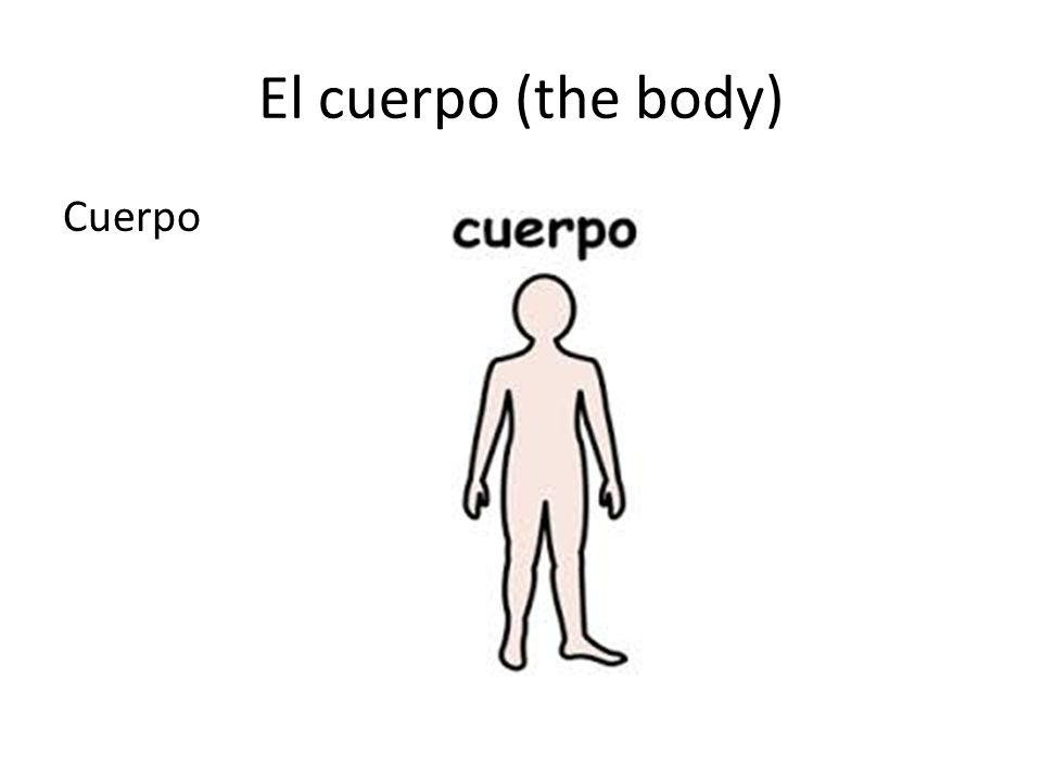 El cuerpo (the body) Choose the right answer: What part of the body is this.