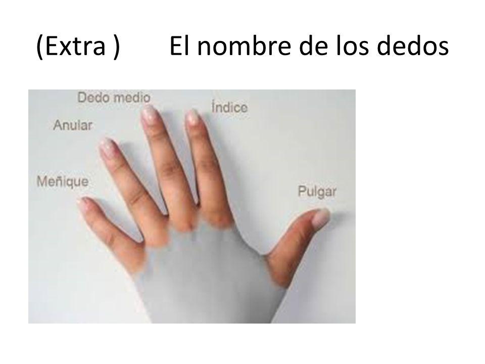 (Extra ) El nombre de los dedos
