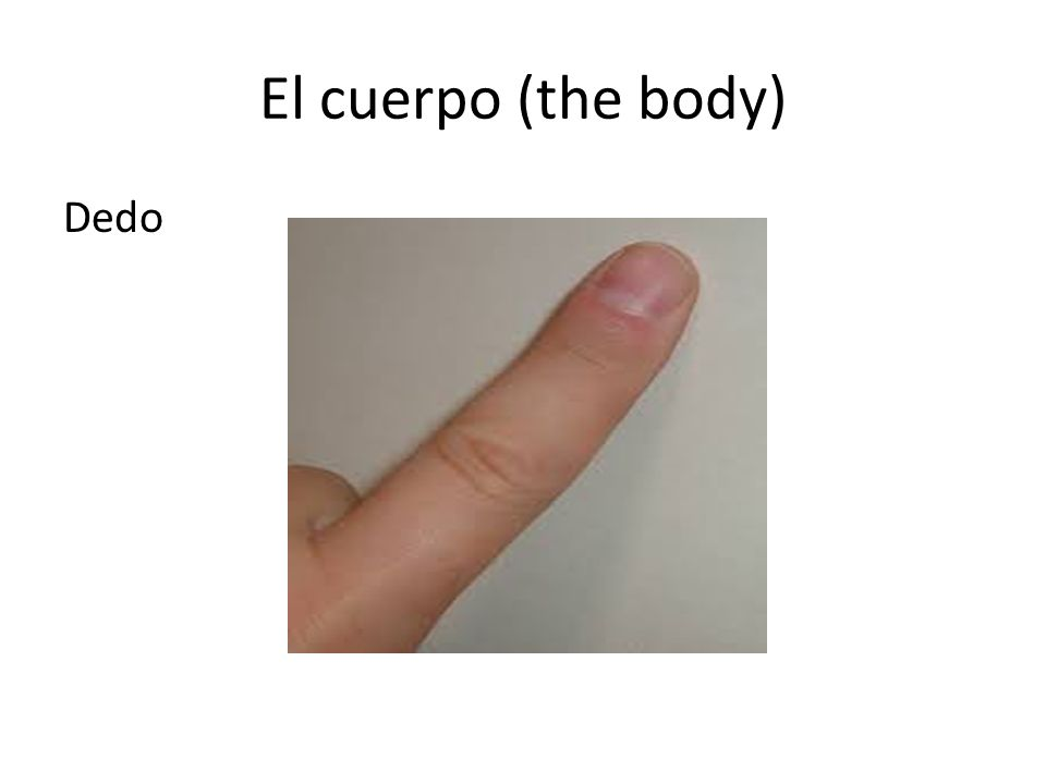El cuerpo Choose the right answer: What part of the body is this? pies manos cuello dedo del pie