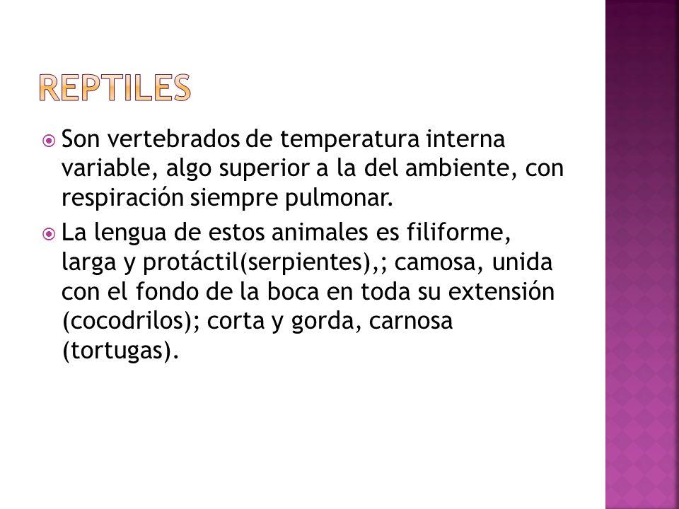 Son vertebrados de temperatura interna variable, algo superior a la del ambiente, con respiración siempre pulmonar. La lengua de estos animales es fil