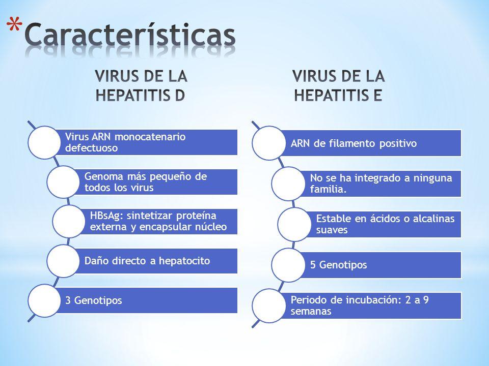 * Fase ictérica * Disminución de síntomas generales * Hepatomegalia, esplenomegalia, adenopatías * Telangiectasias * Fase de convalescencia * HDV: 3-4 meses (duración HBV) * HEV: 1-2 meses