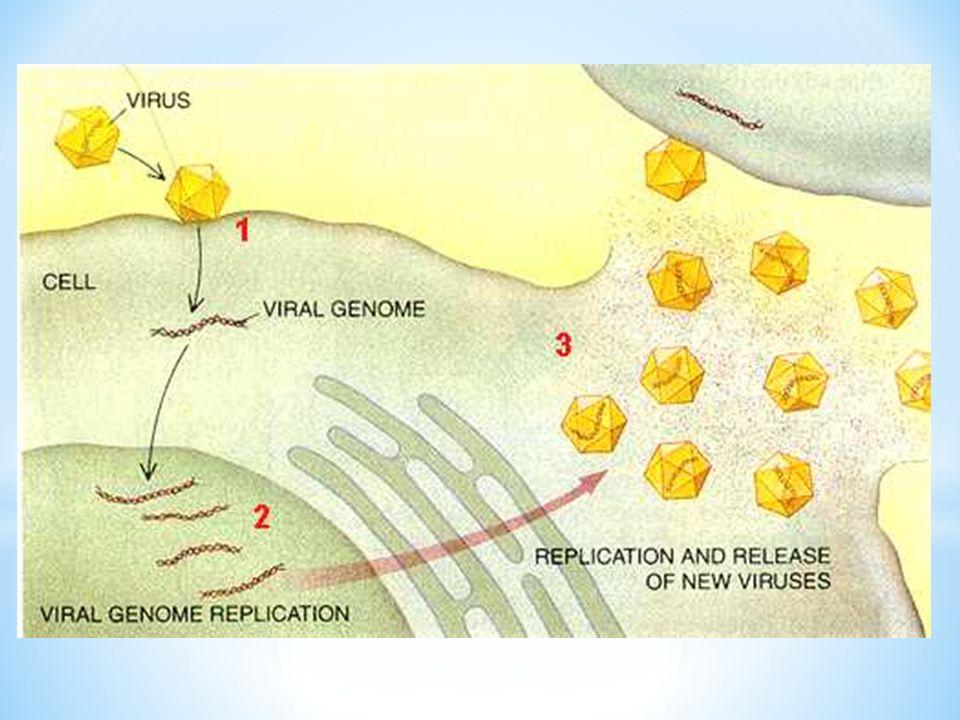 Existen dos tipos de infeccion por VHD: