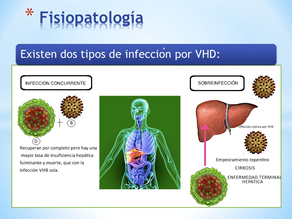 VIRUS DE LA HEPATITIS E FECO- ORAL ARN + pMAL2pMAL3 Virus están presentes en la bilis y las heces de la persona infectada desde el final de la incubación del virus hasta la primera semana de la enfermedad.
