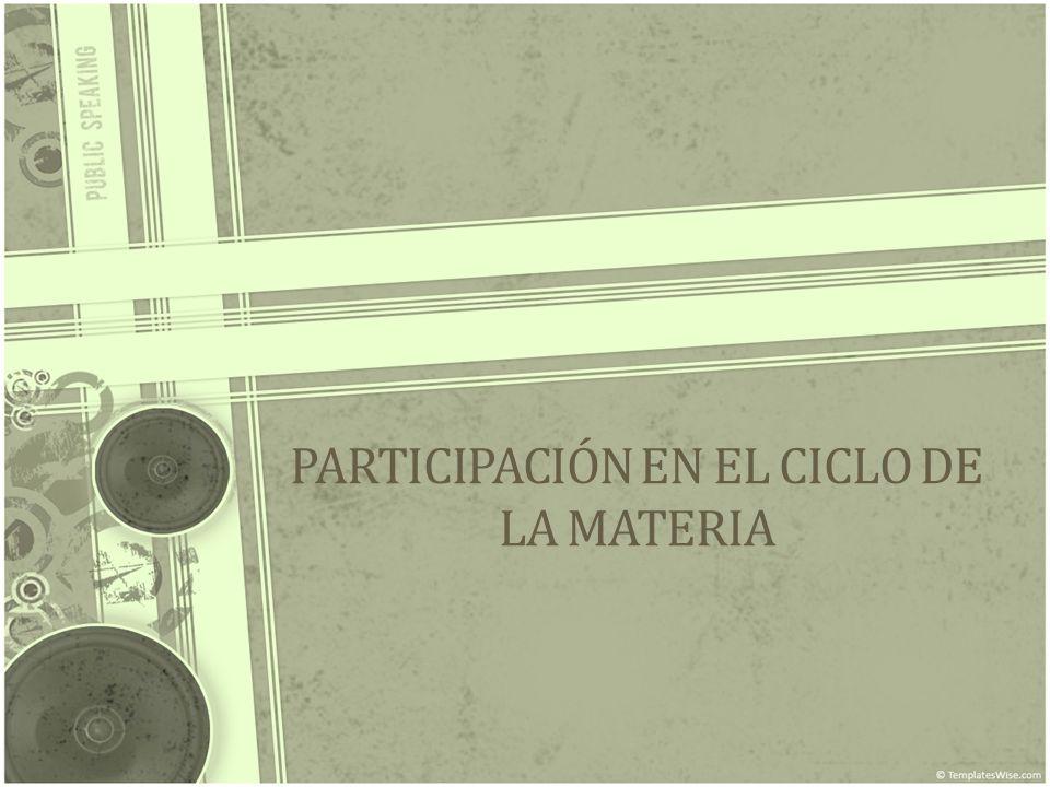 PARTICIPACIÓN EN EL CICLO DE LA MATERIA