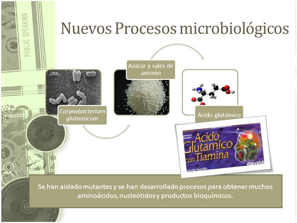 Nuevos Procesos microbiológicos Corynebacterium glutamicum Azúcar y sales de amonio Ácido glutámico Se han aislado mutantes y se han desarrollado proc