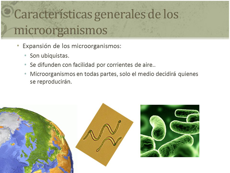 Características generales de los microorganismos Expansión de los microorganismos: Son ubiquistas. Se difunden con facilidad por corrientes de aire..
