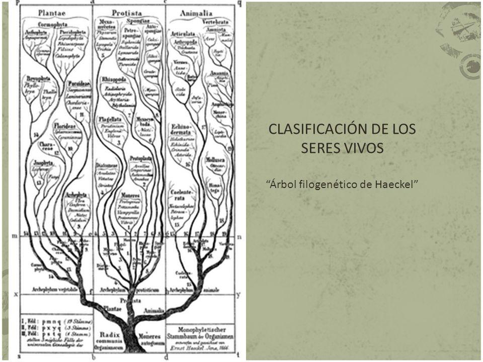 CLASIFICACIÓN DE LOS SERES VIVOS Árbol filogenético de Haeckel
