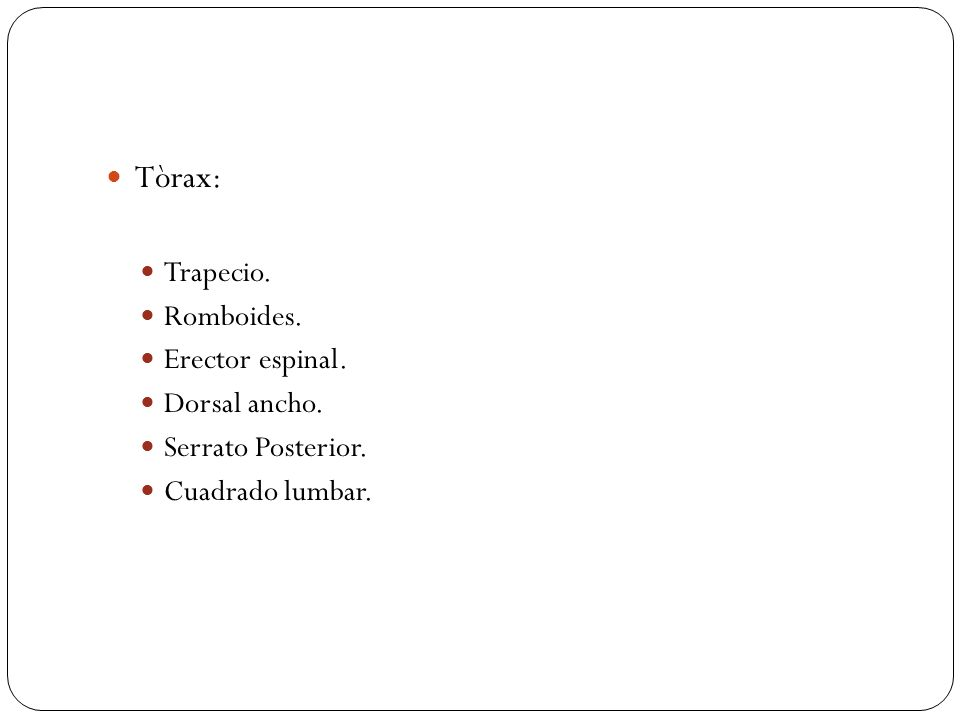 Tòrax: Trapecio. Romboides. Erector espinal. Dorsal ancho. Serrato Posterior. Cuadrado lumbar.