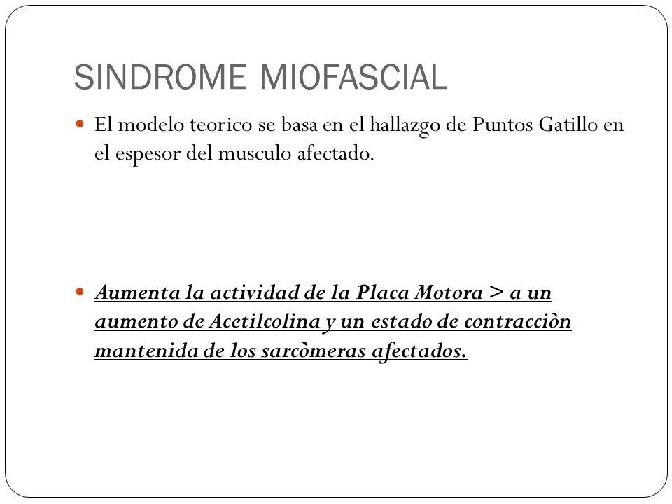 SINDROME MIOFASCIAL El modelo teorico se basa en el hallazgo de Puntos Gatillo en el espesor del musculo afectado. Aumenta la actividad de la Placa Mo