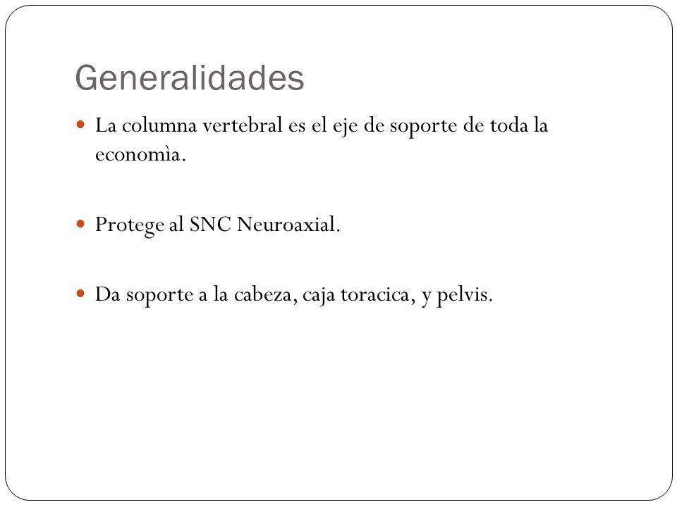 Generalidades La columna vertebral es el eje de soporte de toda la economìa.