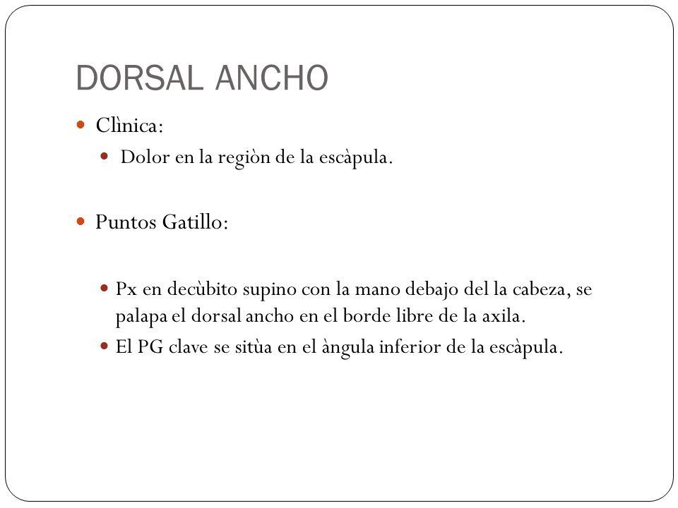 DORSAL ANCHO Clìnica: Dolor en la regiòn de la escàpula. Puntos Gatillo: Px en decùbito supino con la mano debajo del la cabeza, se palapa el dorsal a