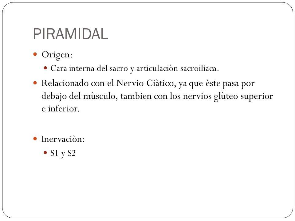 PIRAMIDAL Origen: Cara interna del sacro y articulaciòn sacroiliaca. Relacionado con el Nervio Ciàtico, ya que èste pasa por debajo del mùsculo, tambi
