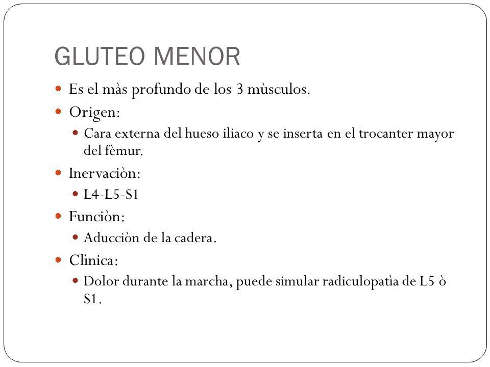 GLUTEO MENOR Es el màs profundo de los 3 mùsculos.