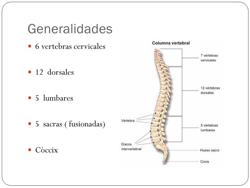 Generalidades 6 vertebras cervicales 12 dorsales 5 lumbares 5 sacras ( fusionadas) Còccix