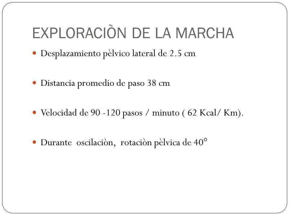 EXPLORACIÒN DE LA MARCHA Desplazamiento pèlvico lateral de 2.5 cm Distancia promedio de paso 38 cm Velocidad de 90 -120 pasos / minuto ( 62 Kcal/ Km).