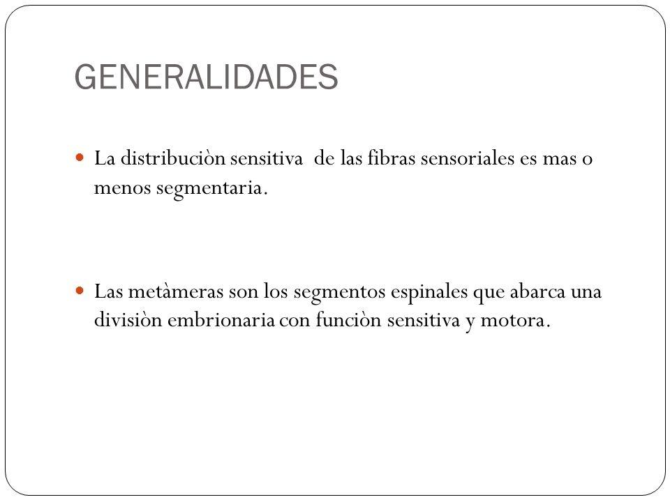 GENERALIDADES La distribuciòn sensitiva de las fibras sensoriales es mas o menos segmentaria. Las metàmeras son los segmentos espinales que abarca una