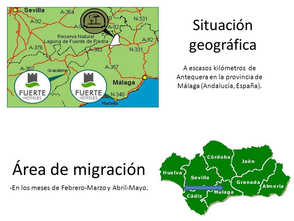 Situación geográfica Área de migración -En los meses de Febrero-Marzo y Abril-Mayo. A escasos kilómetros de Antequera en la provincia de Málaga (Andal