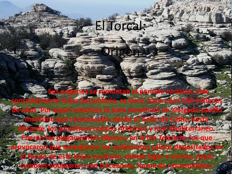 El Torcal: Origen Sus orígenes se remontan al período Jurásico, más concretamente la Era Secundaria, es decir, hace unos 160 millones de años. Por aqu