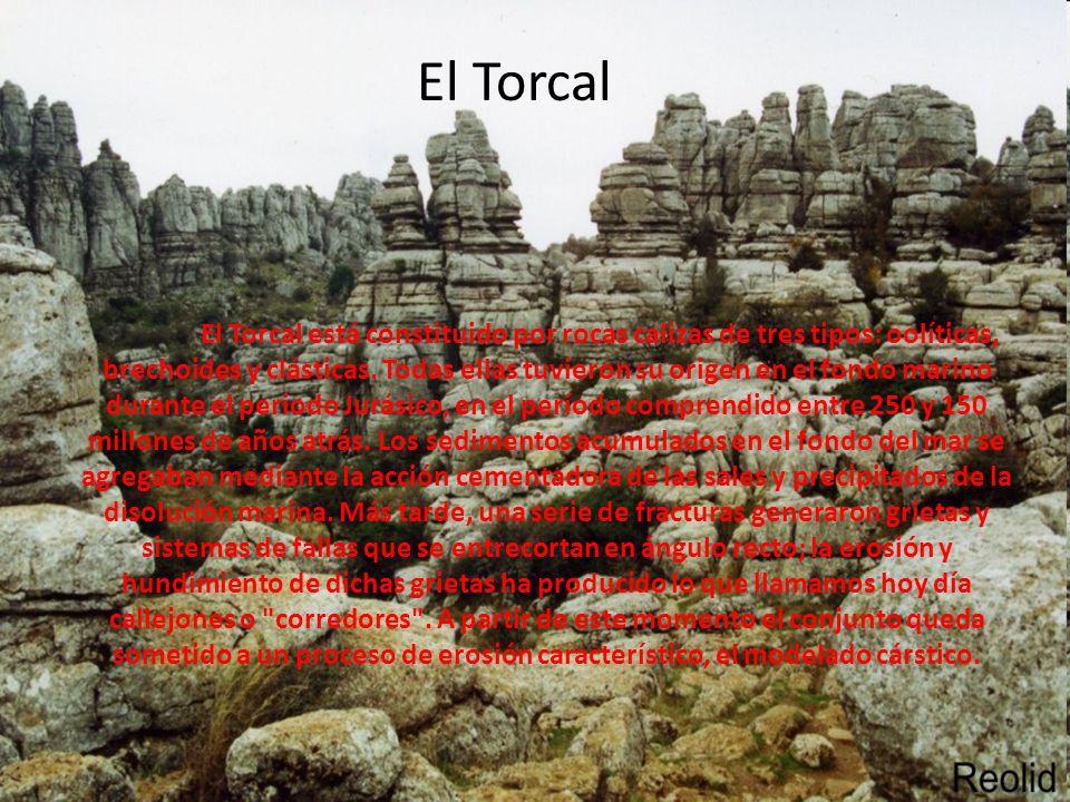 El Torcal El Torcal está constituido por rocas calizas de tres tipos: oolíticas, brechoides y clásticas. Todas ellas tuvieron su origen en el fondo ma